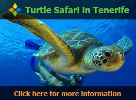 Turtle Safari in Tenerife - Click here for more information