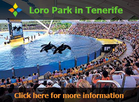 Orca Ocean at the Loro Park in Tenerife - Click here for more information