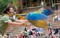 Exotic Bird Show at Jungle Park in Tenerife