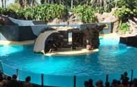 Sea Lions at Loro Park in Tenerife